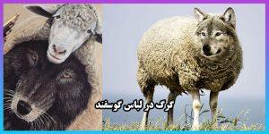 گرگ در لباس گوسفند